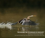 REVEALING THE TECHNIQUES IN WILDLIFE