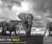Into the wild with Gurucharan Roopra