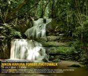 KARURA FOREST PHOTOWALK